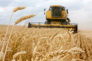Wheat prices have fallen in Europe after news that harvests are due later this year